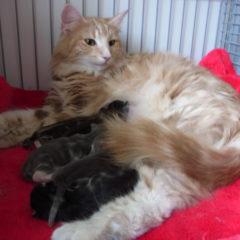 Skittles met pasgeboren kittens