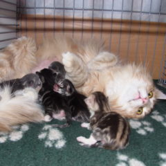 Skittles met pasgeboren kittens 2