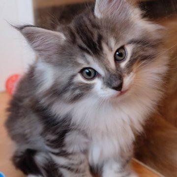 Alle kittens zijn verhuisd